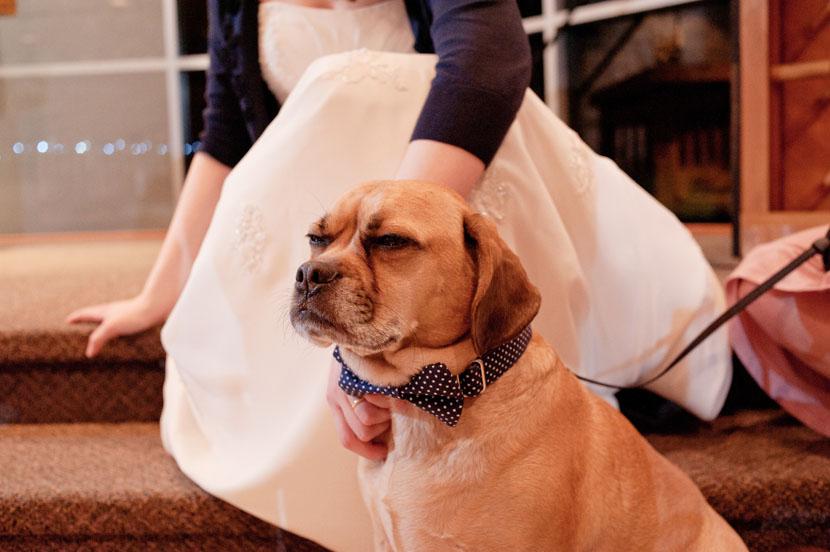 dog in a bowtie at wedding