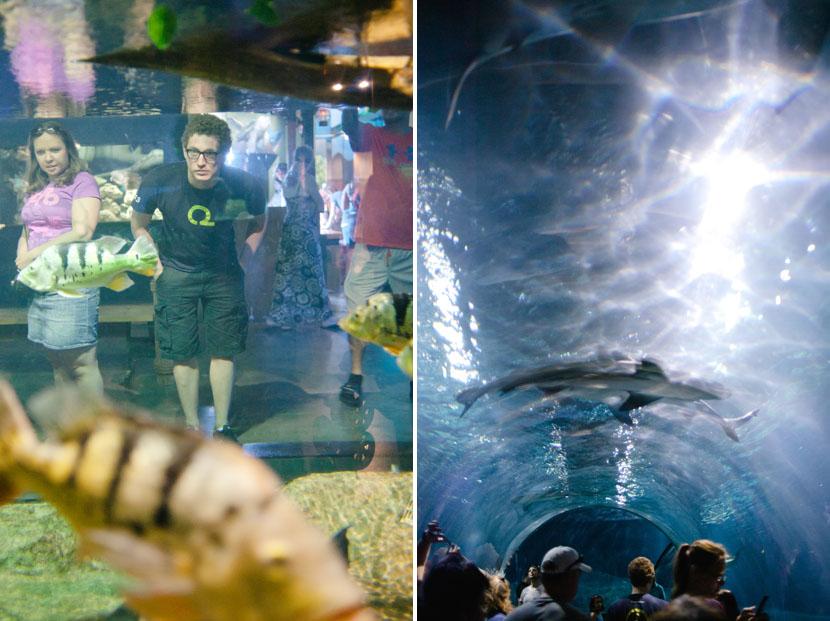 aquarium wedding photography