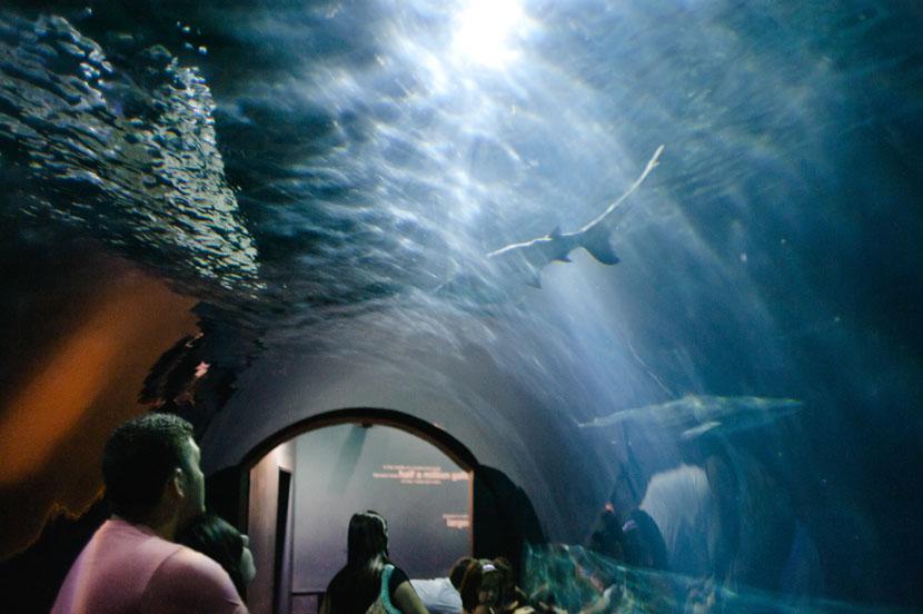 aquarium reception photos austin
