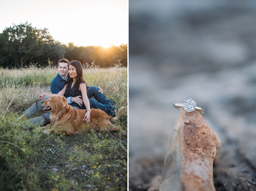 golden retriever in wedding pictures