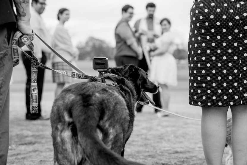 dog with gopro at wedding