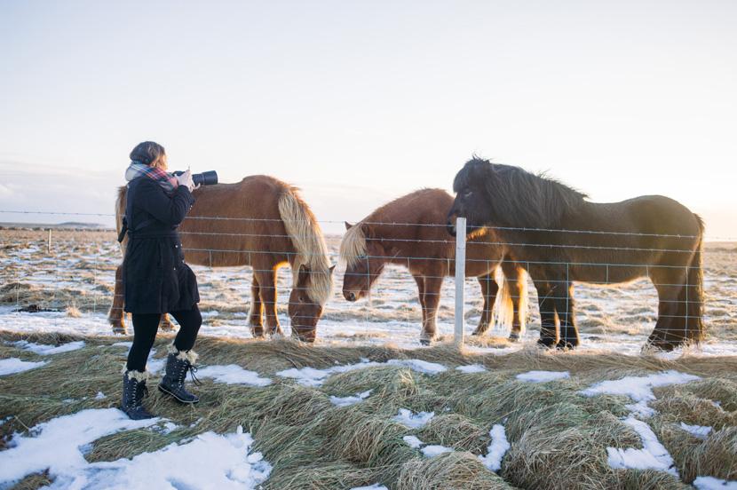 icelandic horse whisperer