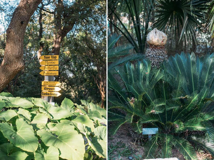 Austin Proposal Photos Zilker Botanical Garden ...