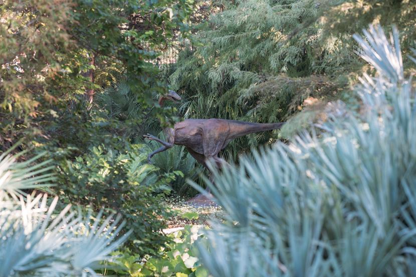 Austin Proposal Photos Zilker Botanical Garden