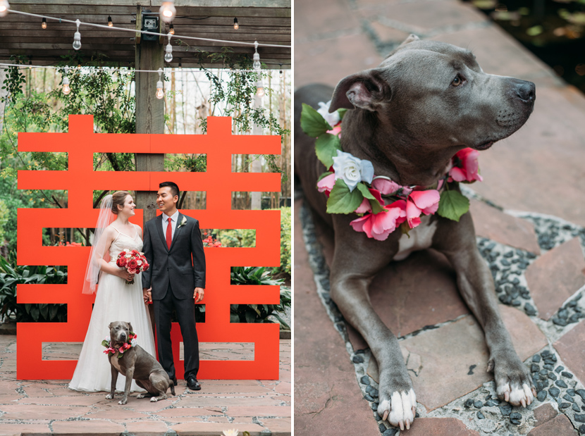 rescue pit bull as the flower girl in a wedding