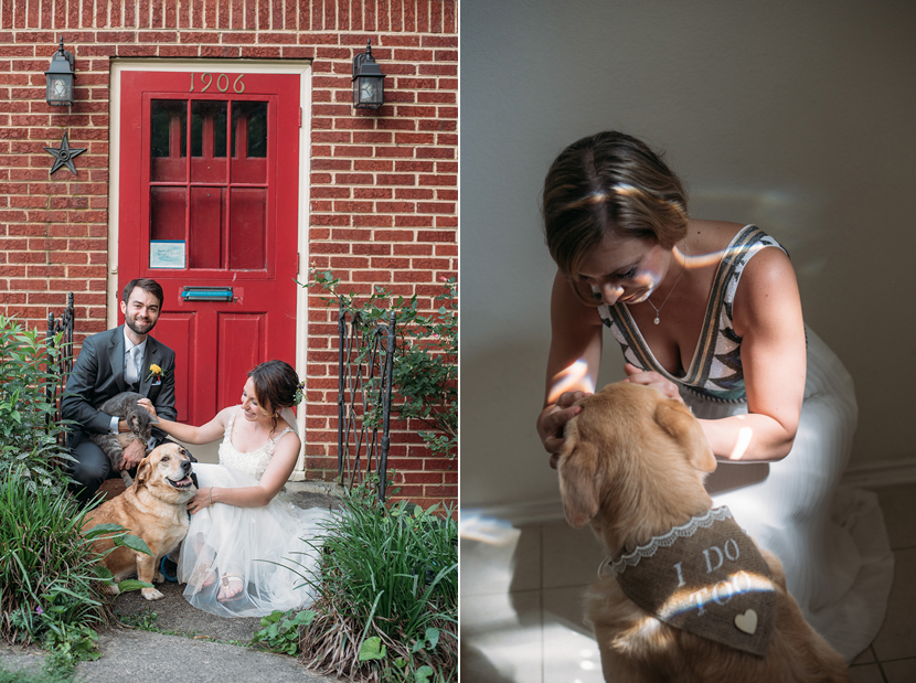 dogs and cats in wedding